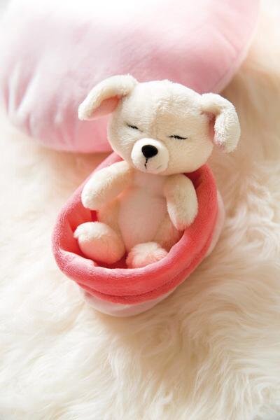 Kuscheltier Hund im rot-rosanen Körbchen