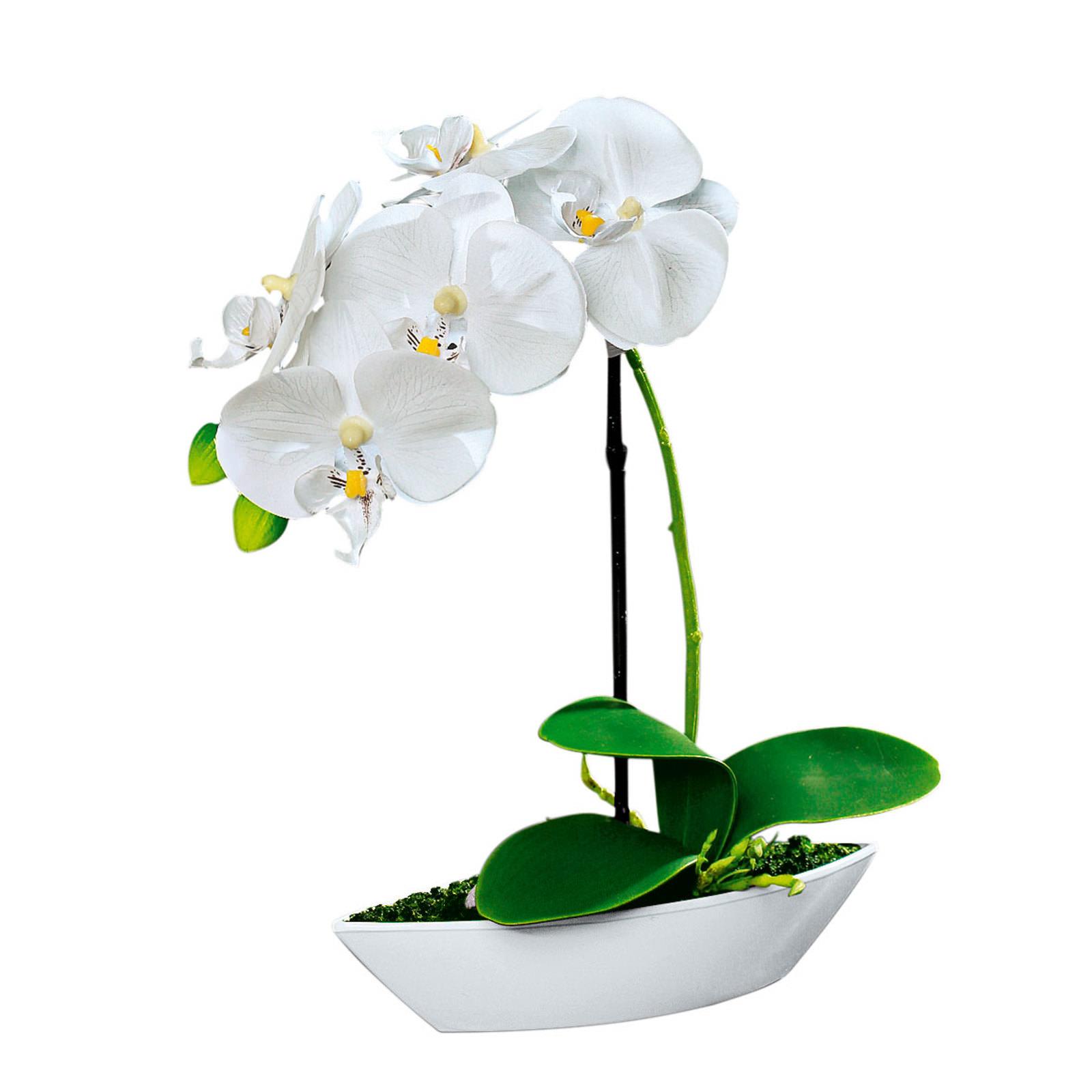 orchidee online entdecken schaffrath ihr m belhaus. Black Bedroom Furniture Sets. Home Design Ideas