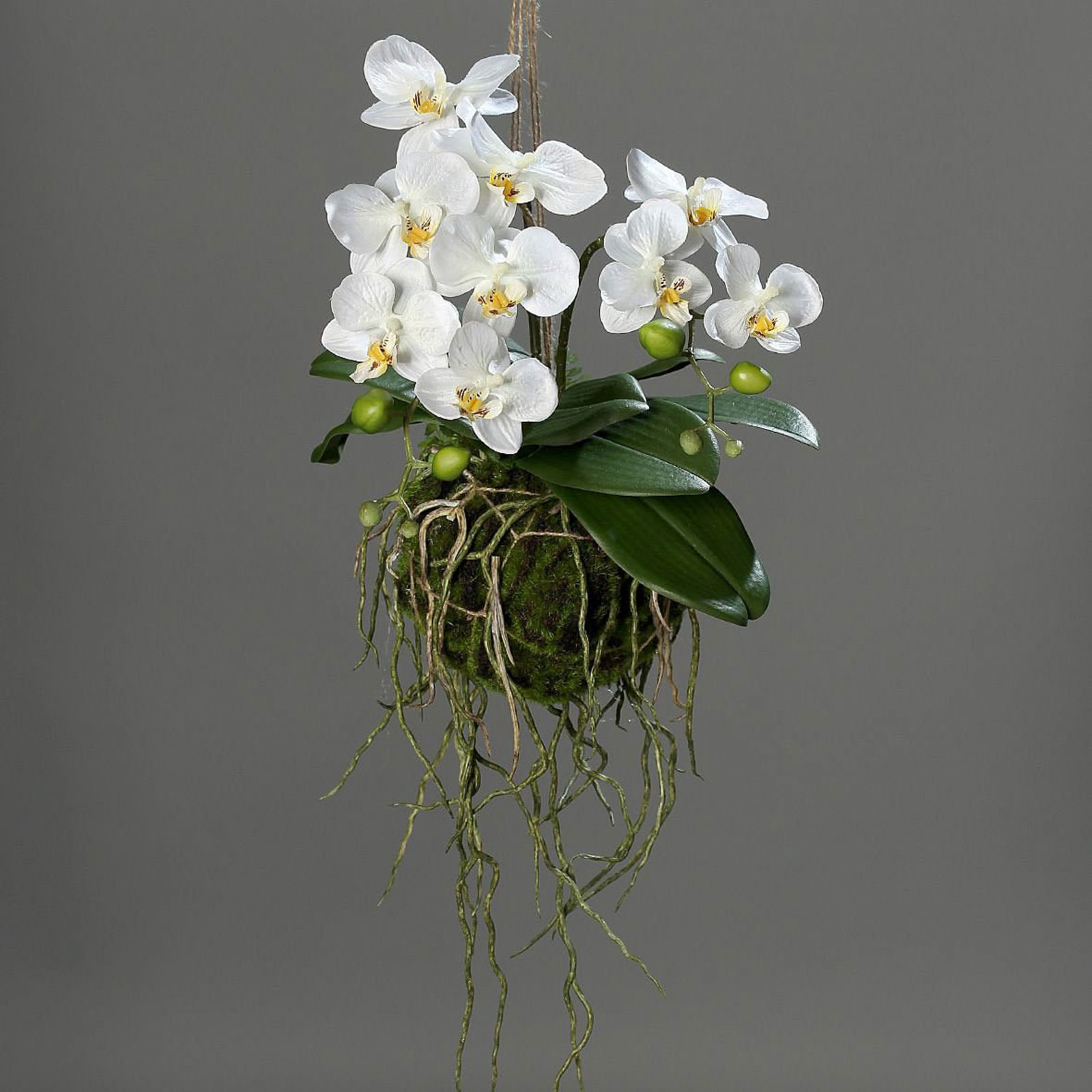 orchidee online entdecken knuffmann ihr m belhaus. Black Bedroom Furniture Sets. Home Design Ideas