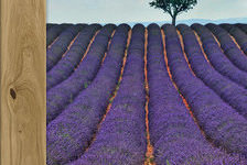 Mood Of Provence Collection